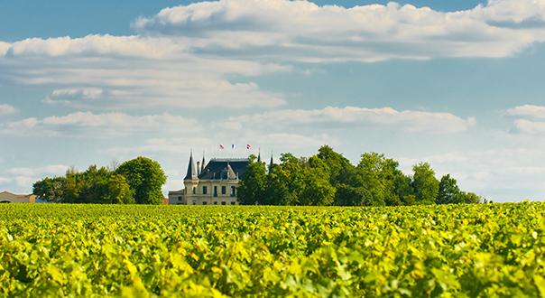 vineyard-in-margaux