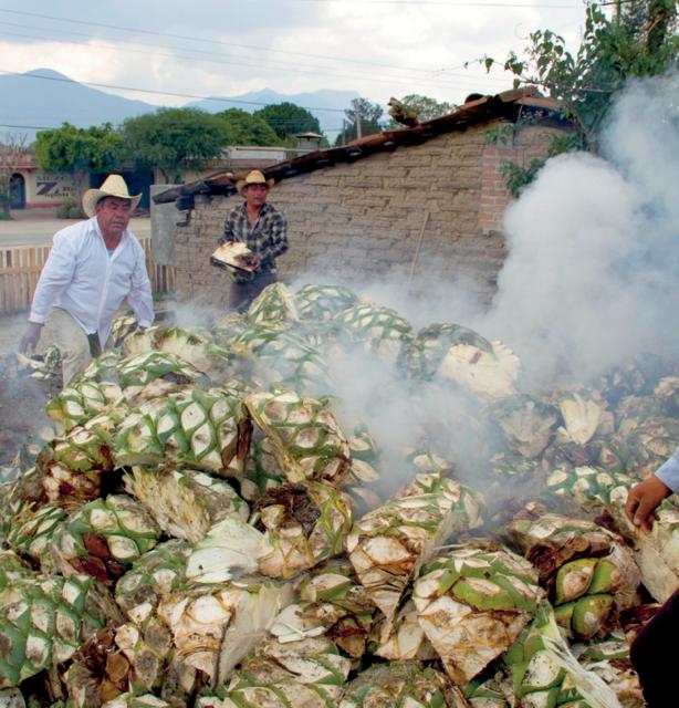 Monteleobos Distillery