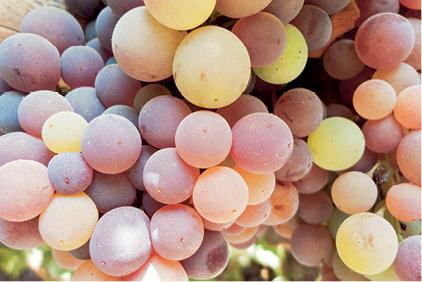 grapey grape