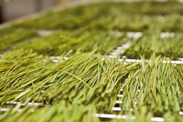 Zub_Grass_Harvest_5_RGB_HR